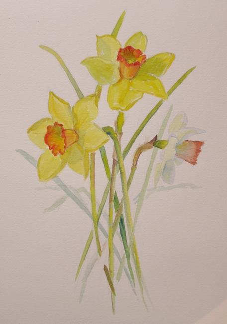 ruthkaldor_daffodil