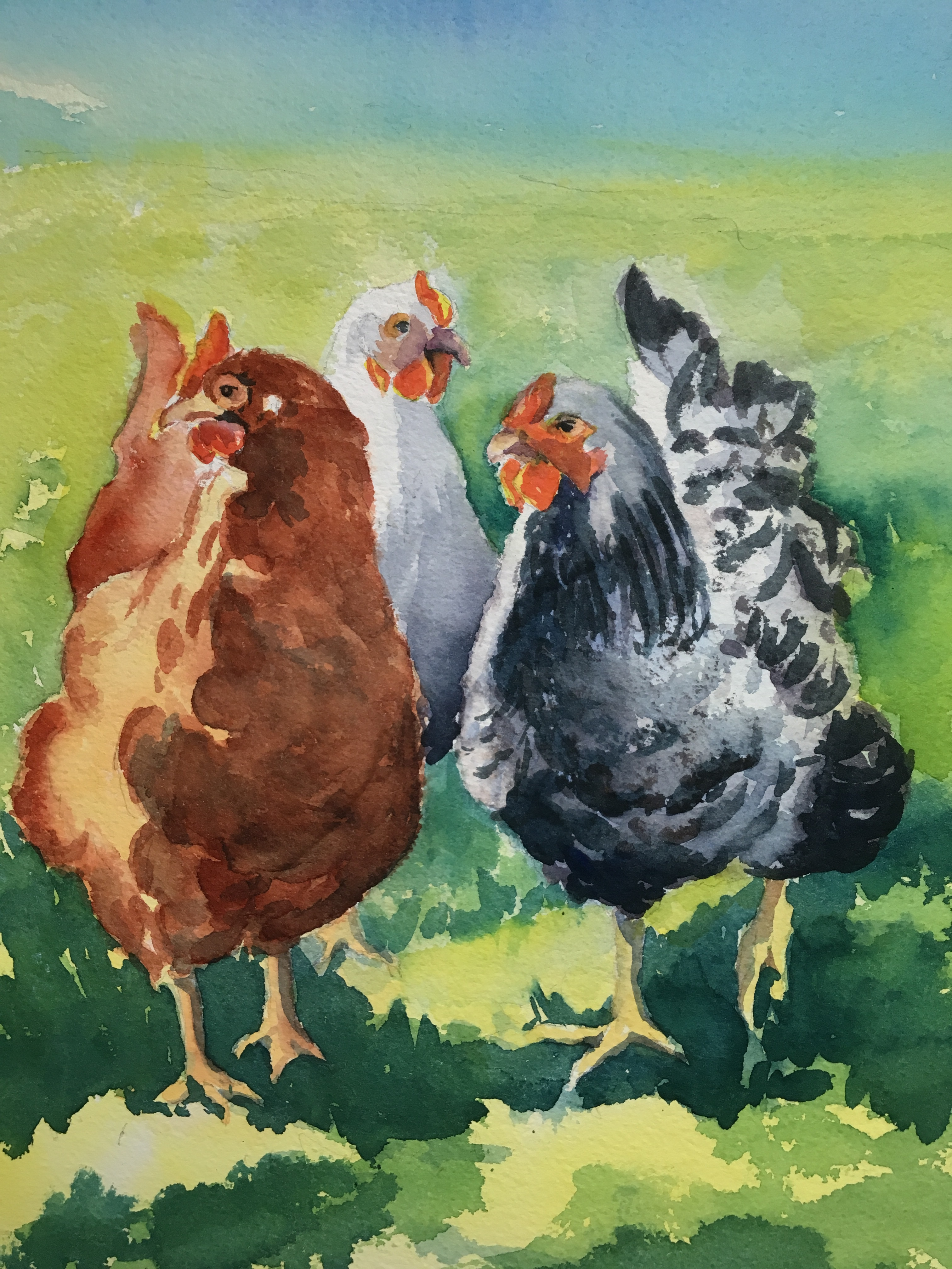 Three chickens, one on the right is a Sussex hen and one on the left is a brownish red color.